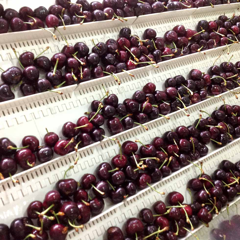 Cherry Packing