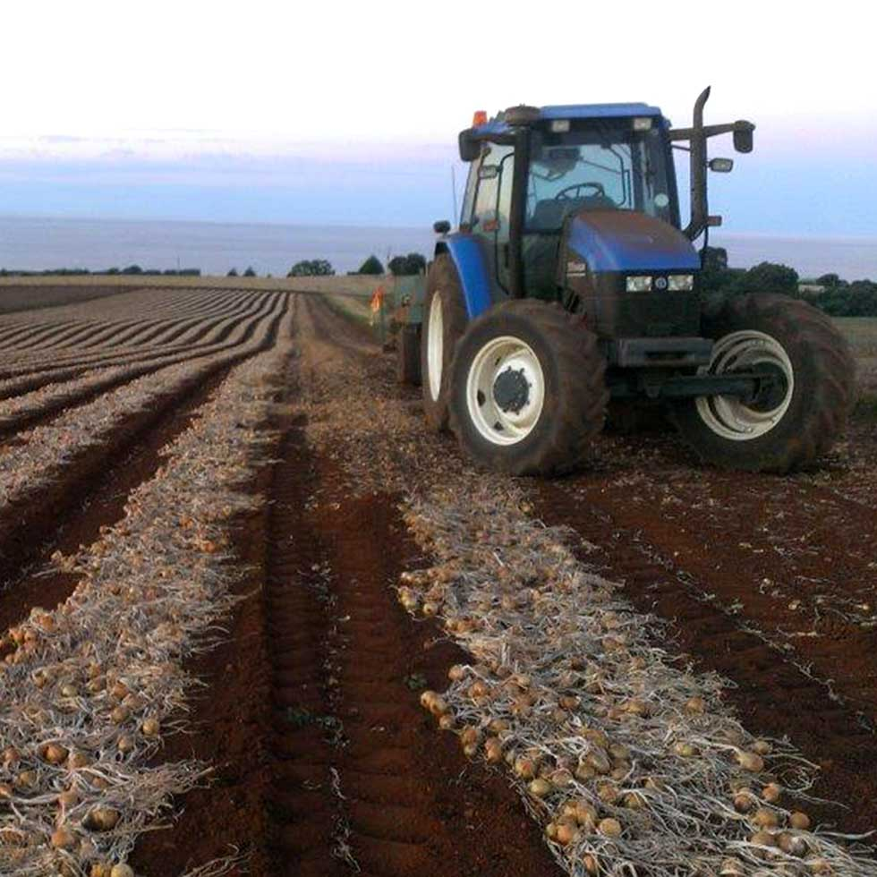 Tractor in Onion Paddock